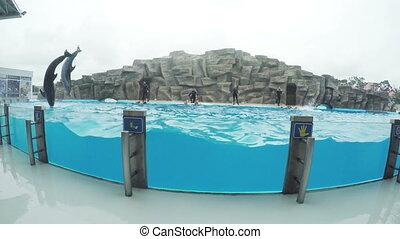 Dolphins in dolphinarium - In Georgia Batumi Dolphinarium...