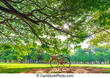 Red bicycle in park under Big tree