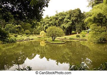 Lake in Sri Lanka in botanical garden