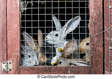 Rabbits in a hutch - A group of young rabbits in the hutch