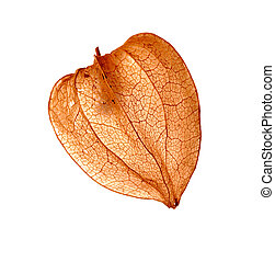 Fruit - Cape gooseberry - Detail of the fruit - Cape...