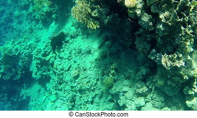 Beautiful underwater view of fishes and corals - Undersea...