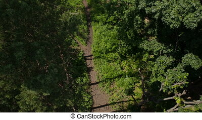 Flight over the Footpath in the Forest