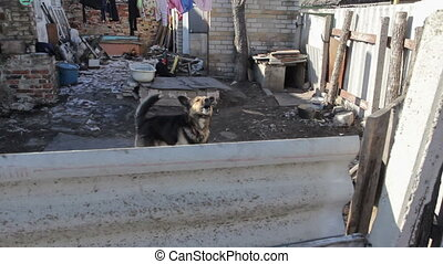 Slumdog Dog - Dog guards a house