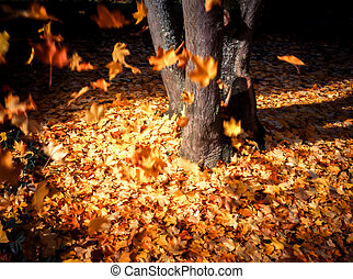 Leaves falling from tree in fall