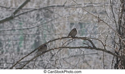 Sparrows on a Branch 2