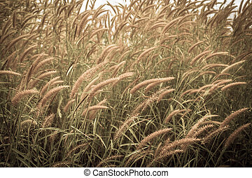 Flower grass in the nature. - Flower grass in the meadow.