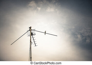 antenna and wagtail bird