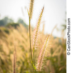 Flower grass in the nature - Flower grass in the meadow