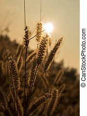 Flower grass in the nature. - Flower grass in the meadow...