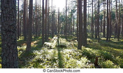 walking in the north forest, Karelia, Russia