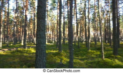landscape with shadows of trees in forest