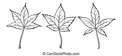 Liquidambar Styraciflua Leaves - Set of Plant Pictograms,...