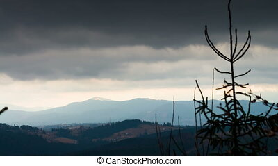 Pine tree in mountains in a landscape - Pine green, swaying...