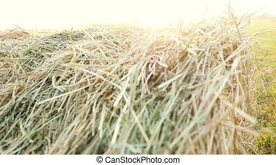Summer Farm Scenery with Haystack in slowmotion on the...