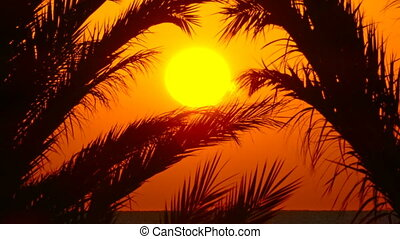 palms and sunrise over sea, zoom in - beautiful landscape...