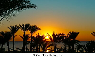 palms and sunrise over sea, zoom in - beautiful beach...