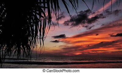 tropical sunset - Tropical sunset with palm branch