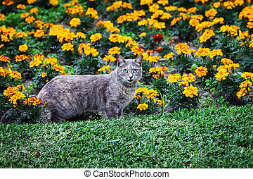 cat and flower bed