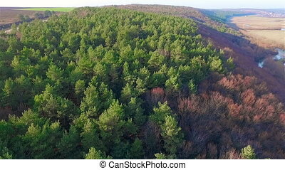 Aerial view of pine forest