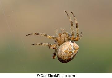 spider in natural habitat