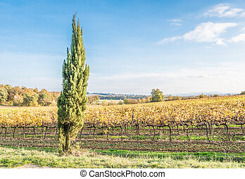 The campaign of Lucignano - The plant and the vineyard in...