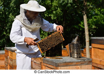 Beekeeper in a protective hat wearing on white shirt holding...