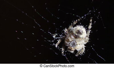 Spider on the web - The spider sitting in the middle of the...