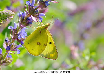 butterfly in natural habitat in summer