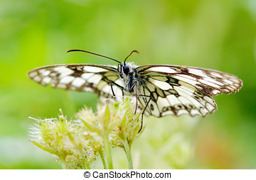 butterfly in natural habitat - beautiful butterfly in...