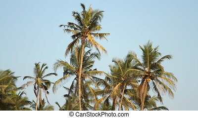 Palm trees over blue sky at sunny day