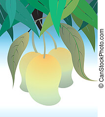 Mangoes - Illustration of mangoes in mango tree
