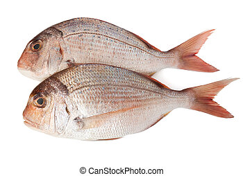two pagellus sea bream - fresh pink sea bream pagellus...