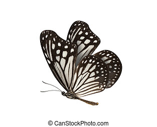 Black and White Butterfly isolated on white background -...