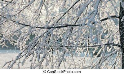 Gentle fluffy snow