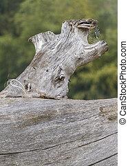 árvore, tronco