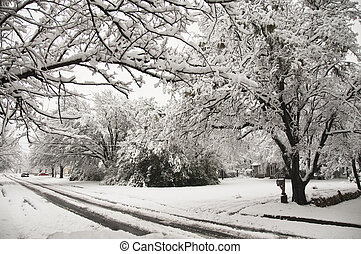 Snow Strom in suburb - Snow covering tree lined street