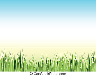 green wet grass - Illustration of green wet grass against...