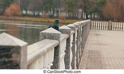 Doves and pigeons standing on a railing, at a natural park,...