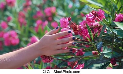 Woman's hand holding a flowers