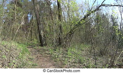 Riding a mountain bike in a forest in spring Shot on action...