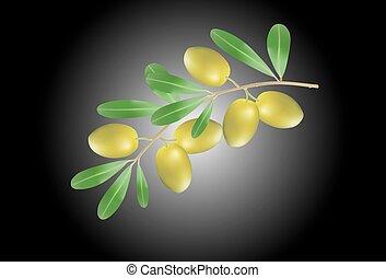 Illustration of Olive branch