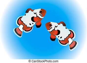 Clownfish with blue background