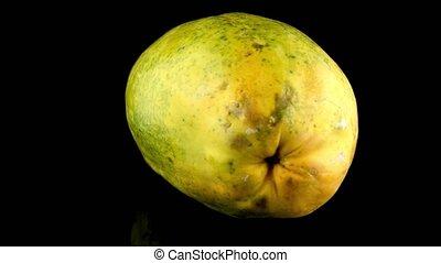 Papaya fruit on black background - Papaya isolated on a...