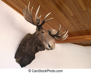 Moose Taxidermy.