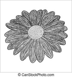 Vector black and white illustration of a flower. Stock...