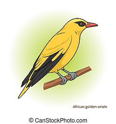African Golden Oriole bird educational game vector - African...