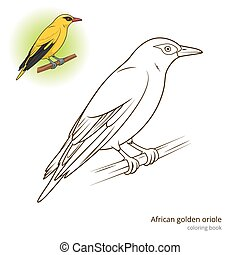 African Golden Oriole bird coloring book vector - African...
