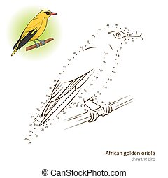 African Golden Oriole bird learn to draw vector - African...