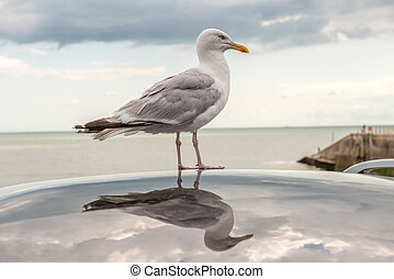 Sea bird reflection - A large sea bird standing on the roof...